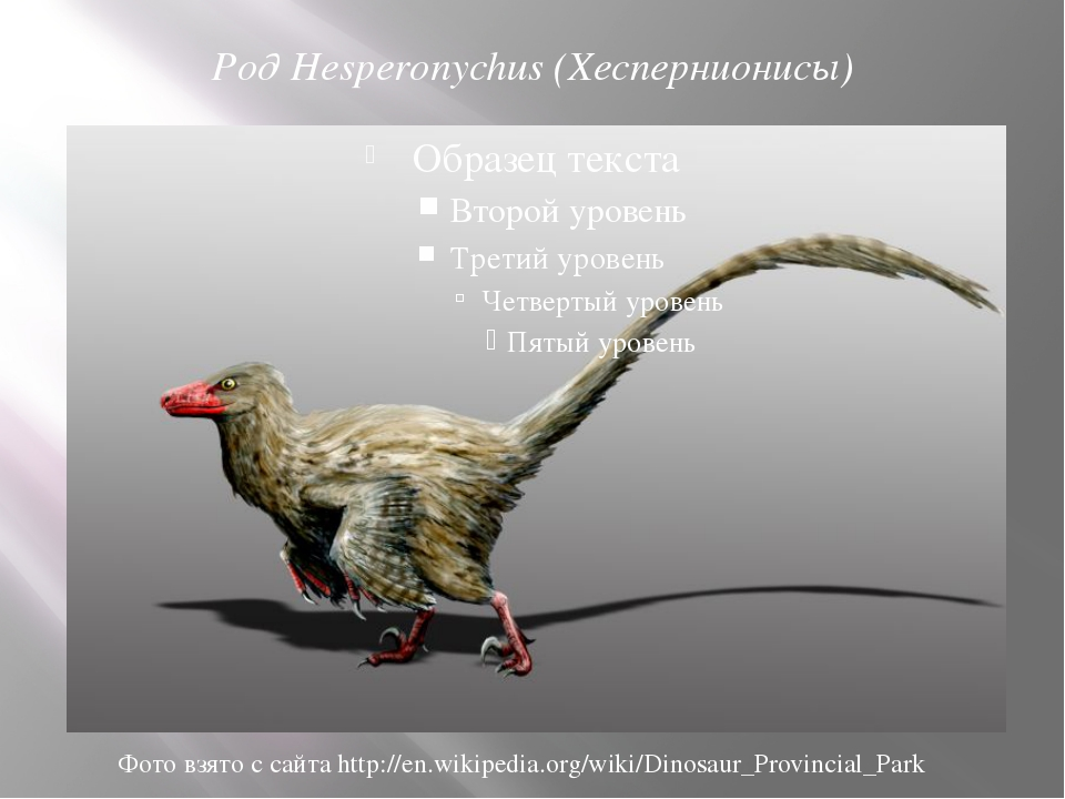 Род Hesperonychus (Хеспернионисы) Фото взято с сайта http://en.wikipedia.org/...