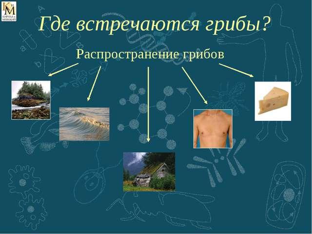 Распространение грибов Где встречаются грибы?