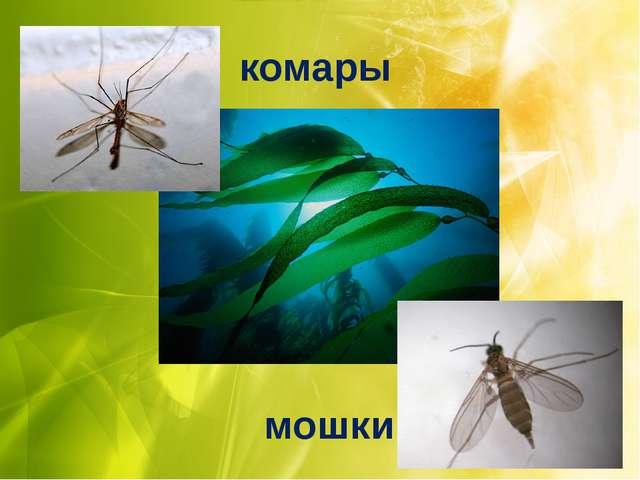 комары мошки
