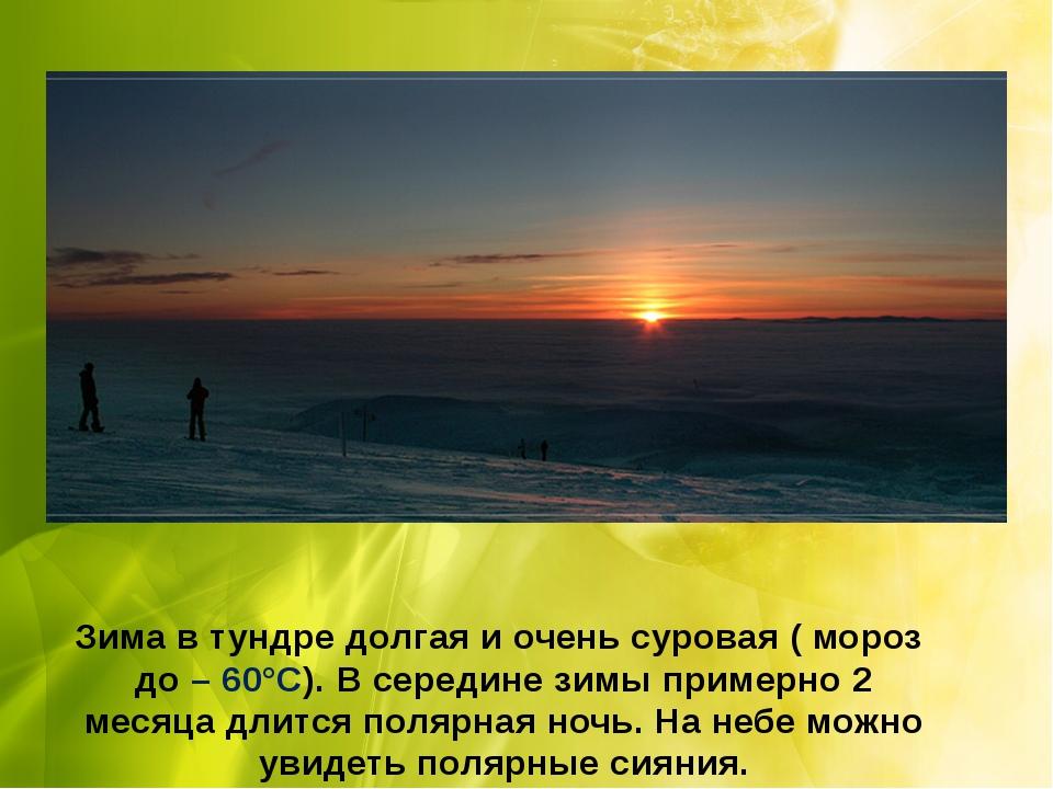 Зима в тундре долгая и очень суровая ( мороз до – 60°С). В середине зимы прим...