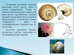 Например, раковины морских животных могут расти лишь в одном направлении. Ч