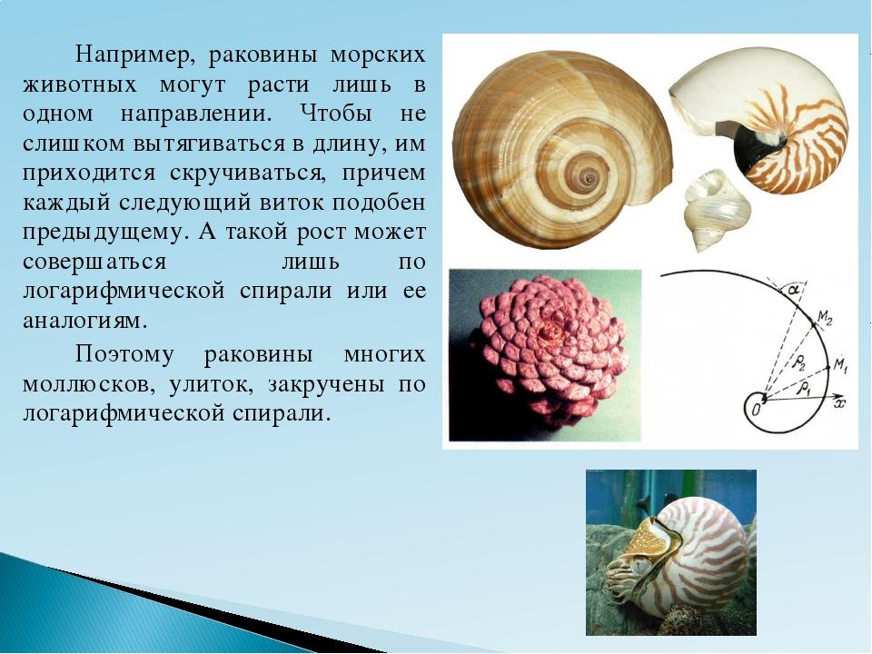 Например, раковины морских животных могут расти лишь в одном направлении. Ч...