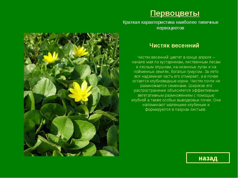 Весенние цветы и описание