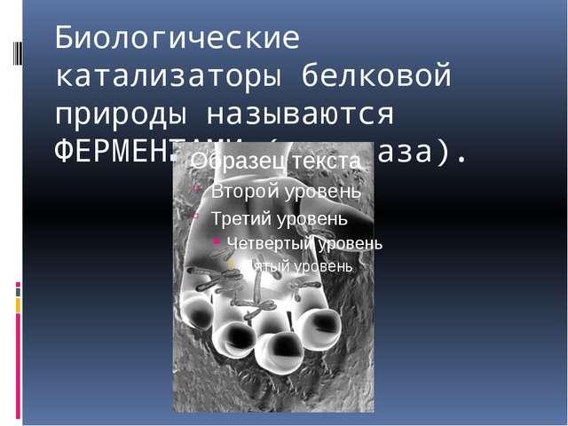 Биологические катализаторы белковой природы называются ФЕРМЕНТАМИ (каталаза).