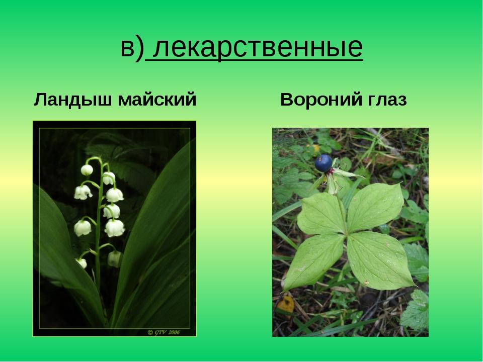 в) лекарственные Ландыш майский Вороний глаз