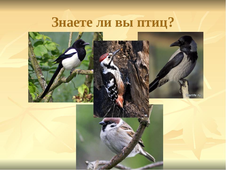 Знаете ли вы птиц?
