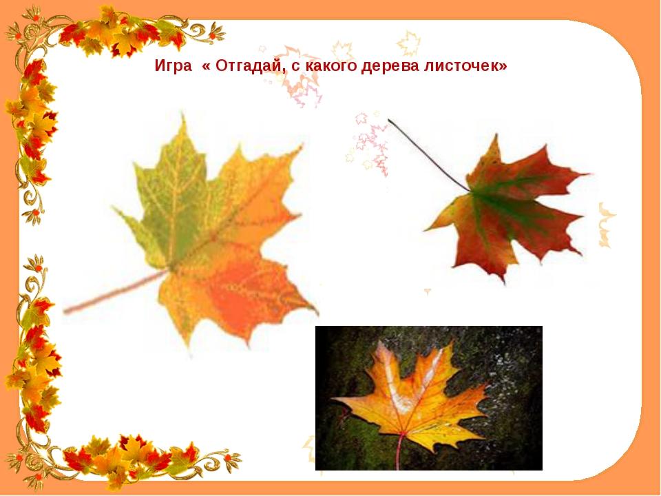 Игра « Отгадай, с какого дерева листочек»