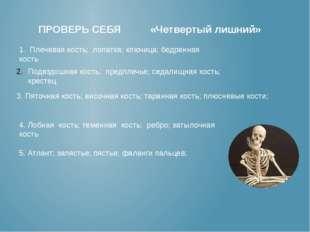 ПРОВЕРЬ СЕБЯ «Четвертый лишний» 1. Плечевая кость; лопатка; ключица; бедренн