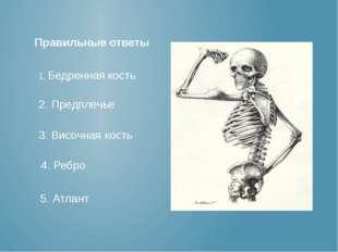 1. Бедренная кость 2. Предплечье 3. Височная кость 4. Ребро 5. Атлант Правиль