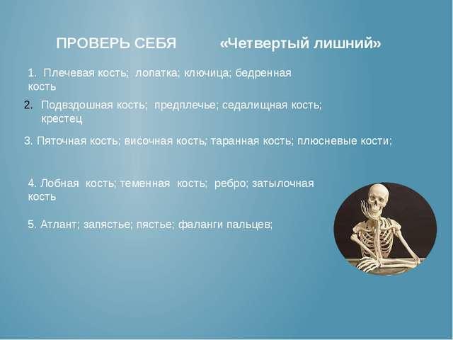 ПРОВЕРЬ СЕБЯ «Четвертый лишний» 1. Плечевая кость; лопатка; ключица; бедренн...