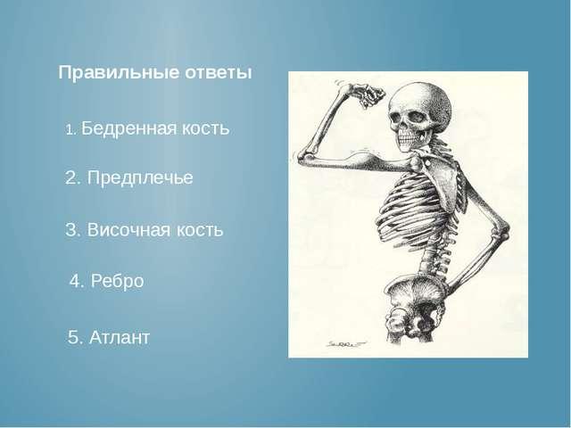 1. Бедренная кость 2. Предплечье 3. Височная кость 4. Ребро 5. Атлант Правиль...