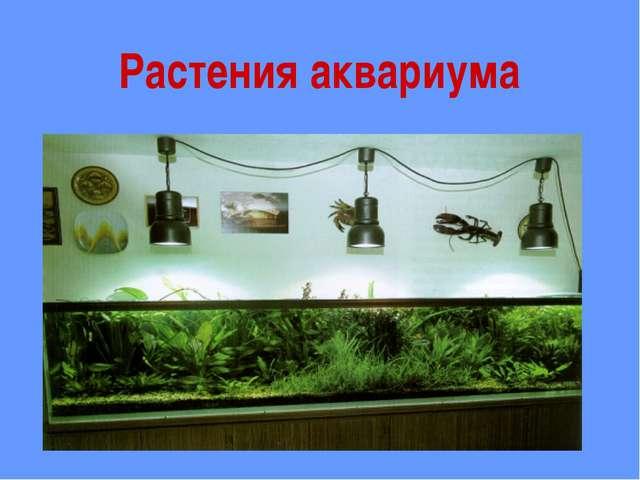Растения аквариума