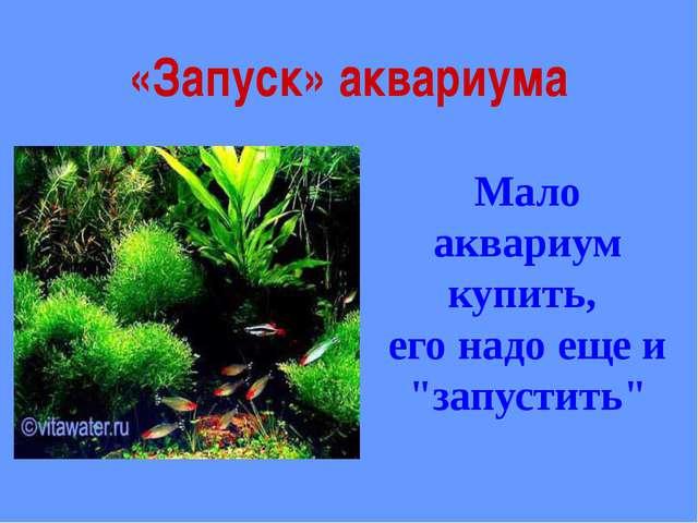 """«Запуск» аквариума Мало аквариум купить, его надо еще и """"запустить"""""""