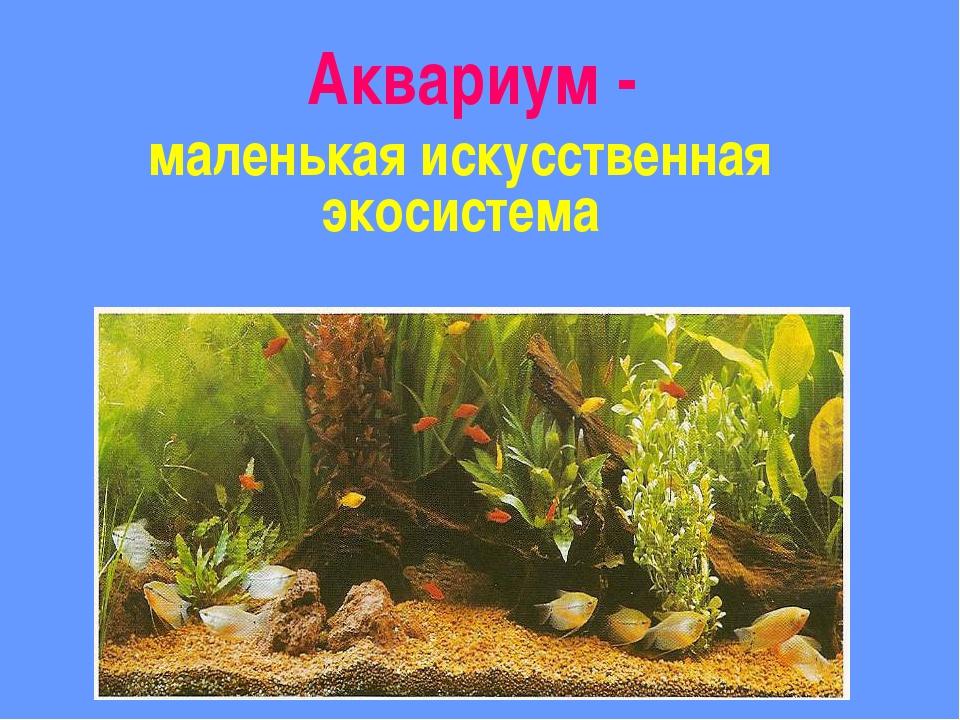Аквариум - маленькая искусственная экосистема