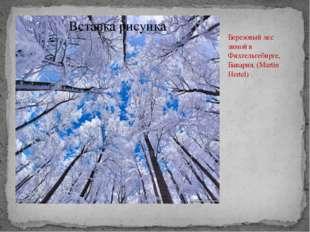 Березовый лес зимой в Фихтельгебирге, Бавария. (Martin Hertel)