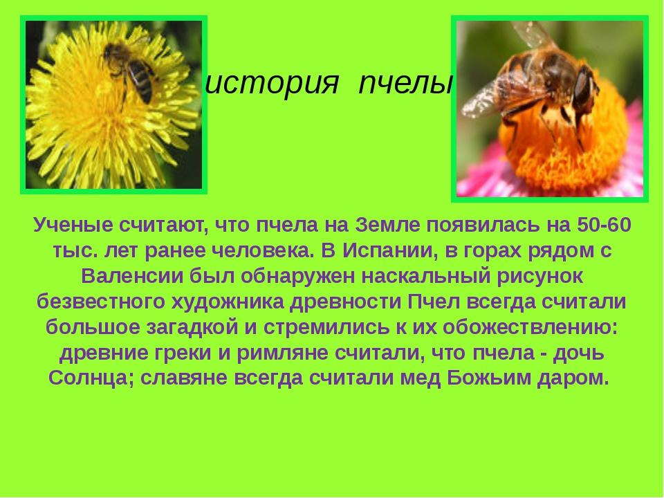 Ученые считают, что пчела на Земле появилась на 50-60 тыс. лет ранее человека...