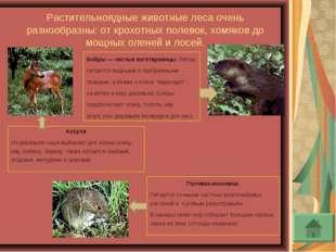 Растительноядные животные леса очень разнообразны: от крохотных полевок, хомя