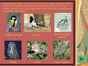 Как прекрасно зайдя в лес услышать пение птиц. Будь-то чудесная песня соловья