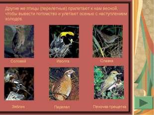 Другие же птицы (перелетные) прилетают к нам весной, чтобы вывести потомство