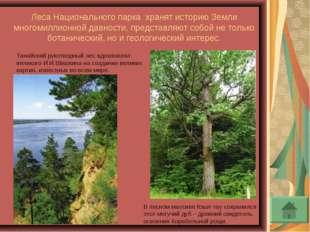 Леса Национального парка хранят историю Земли многомиллионной давности, предс
