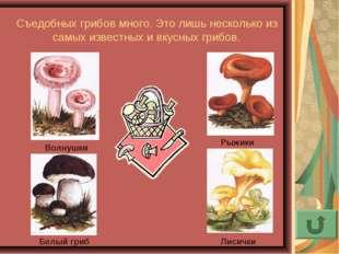 Съедобных грибов много. Это лишь несколько из самых известных и вкусных грибо