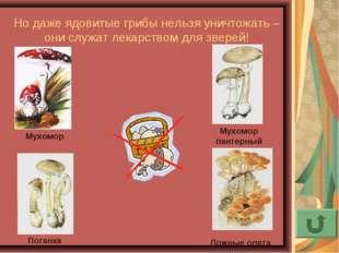 Но даже ядовитые грибы нельзя уничтожать – они служат лекарством для зверей!