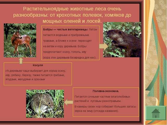Растительноядные животные леса очень разнообразны: от крохотных полевок, хомя...
