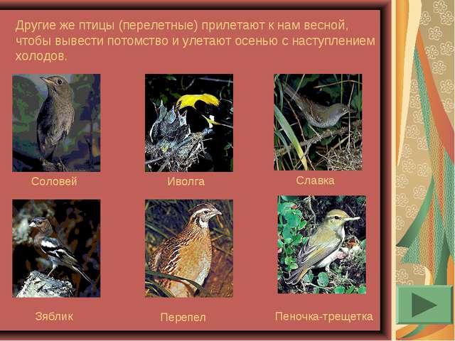 Другие же птицы (перелетные) прилетают к нам весной, чтобы вывести потомство...