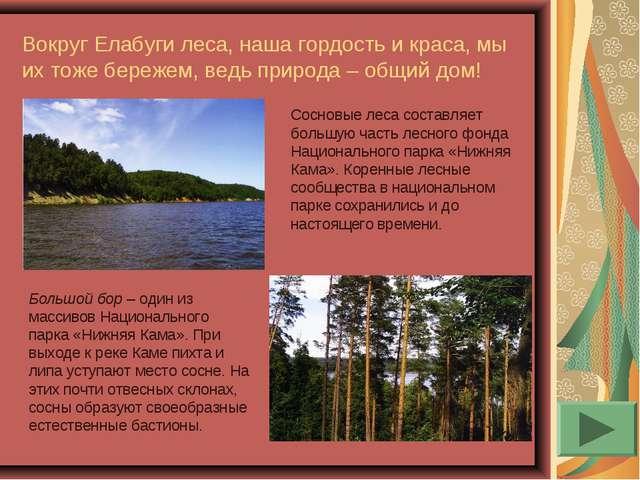 Вокруг Елабуги леса, наша гордость и краса, мы их тоже бережем, ведь природа...
