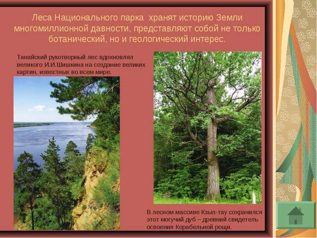 Леса Национального парка хранят историю Земли многомиллионной давности, предс...