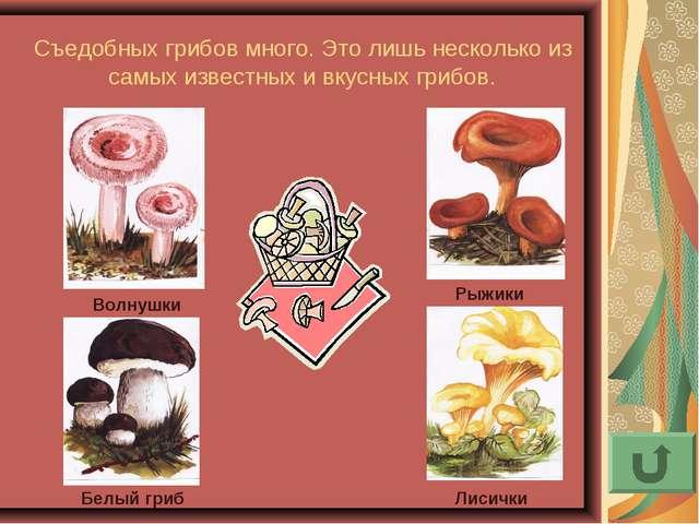 Съедобных грибов много. Это лишь несколько из самых известных и вкусных грибо...