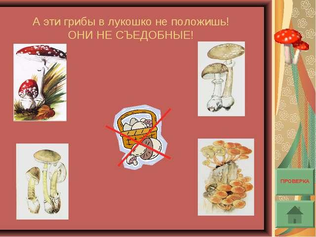 А эти грибы в лукошко не положишь! ОНИ НЕ СЪЕДОБНЫЕ! ПРОВЕРКА