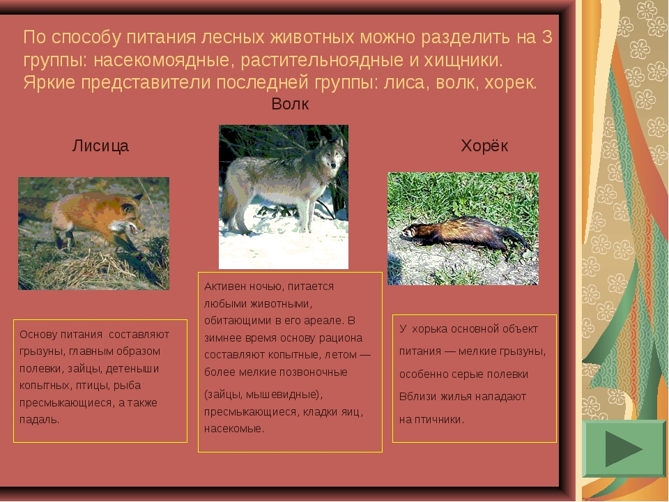 По способу питания лесных животных можно разделить на 3 группы: насекомоядные...