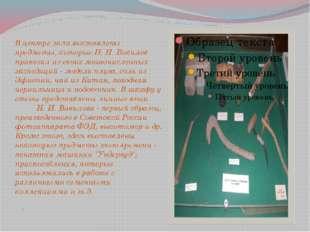 . В центре зала выставлены предметы, которые Н. И. Вавилов привозил из своих