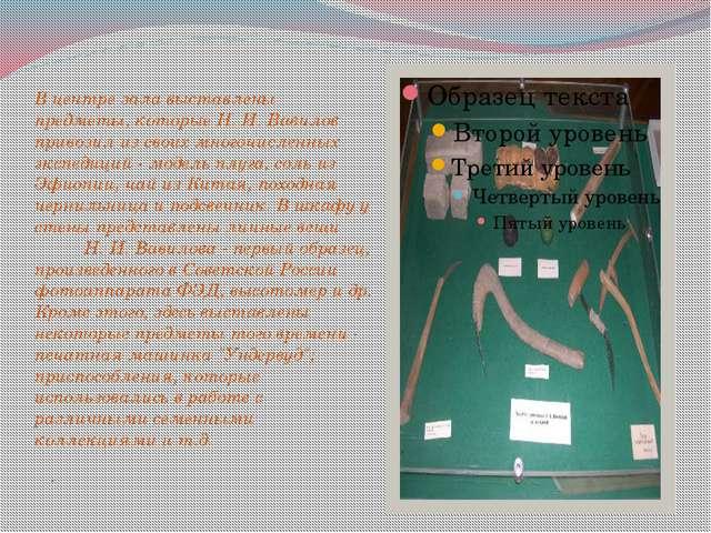 . В центре зала выставлены предметы, которые Н. И. Вавилов привозил из своих...