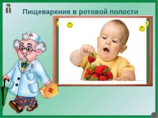 Пищеварение в ротовой полости В ротовой полости начинается химическая и механ