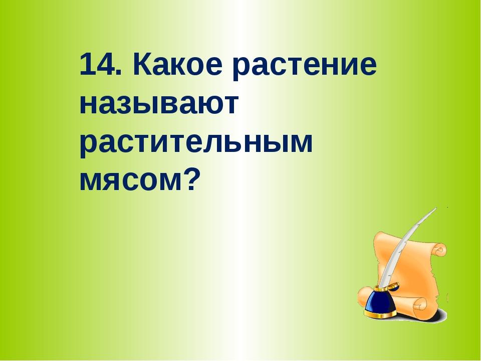 14. Какое растение называют растительным мясом?