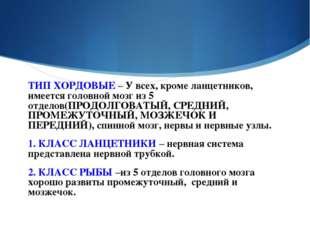 ТИП ХОРДОВЫЕ – У всех, кроме ланцетников, имеется головной мозг из 5 отделов(