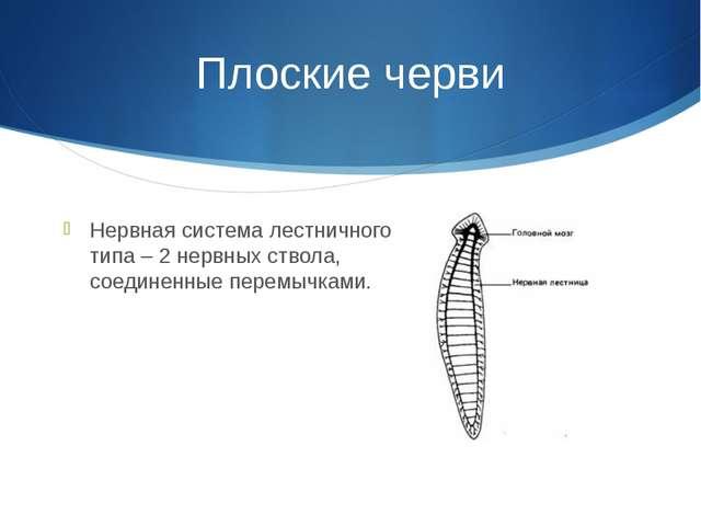 Плоские черви Нервная система лестничного типа – 2 нервных ствола, соединенны...