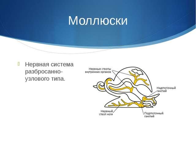 Моллюски Нервная система разбросанно-узлового типа.