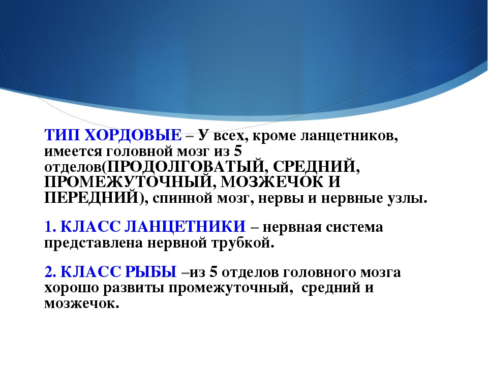 ТИП ХОРДОВЫЕ – У всех, кроме ланцетников, имеется головной мозг из 5 отделов(...