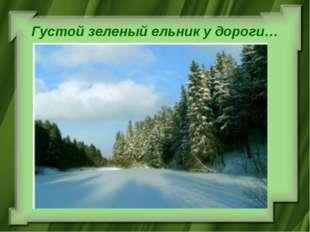 Густой зеленый ельник у дороги…