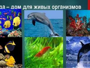 Вода – дом для живых организмов