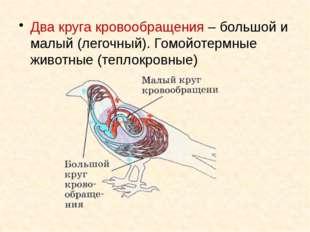 Два круга кровообращения – большой и малый (легочный). Гомойотермные животные
