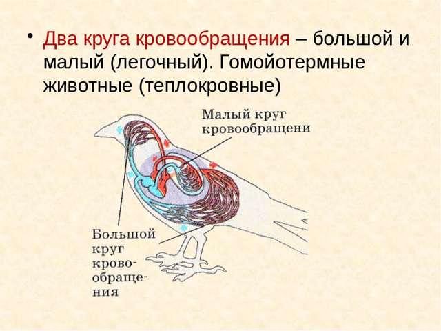 Два круга кровообращения – большой и малый (легочный). Гомойотермные животные...