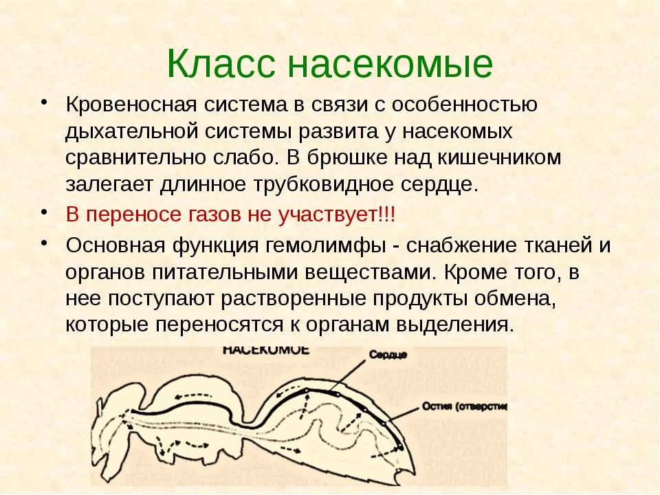 Класс насекомые Кровеносная система в связи с особенностью дыхательной систем...