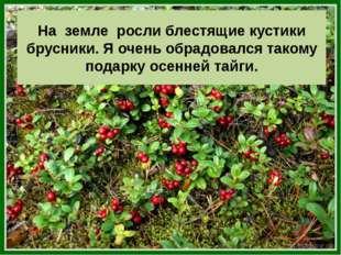 На земле росли блестящие кустики брусники. Я очень обрадовался такому подарку