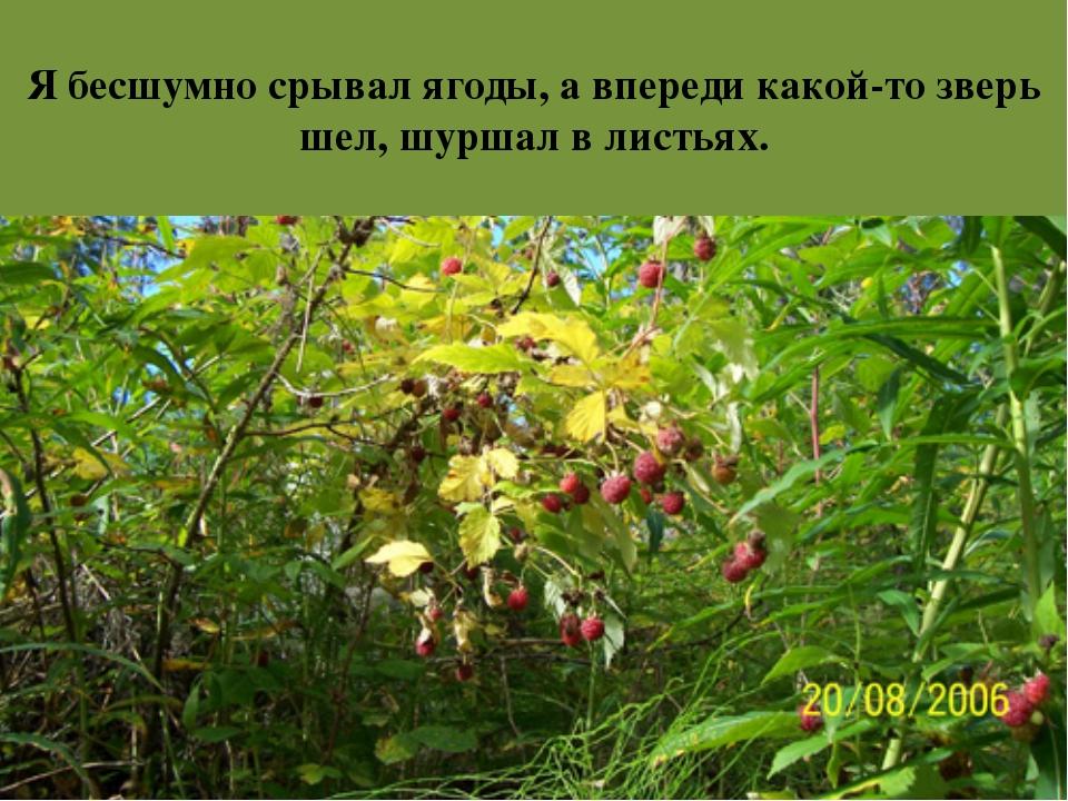 Я бесшумно срывал ягоды, а впереди какой-то зверь шел, шуршал в листьях.