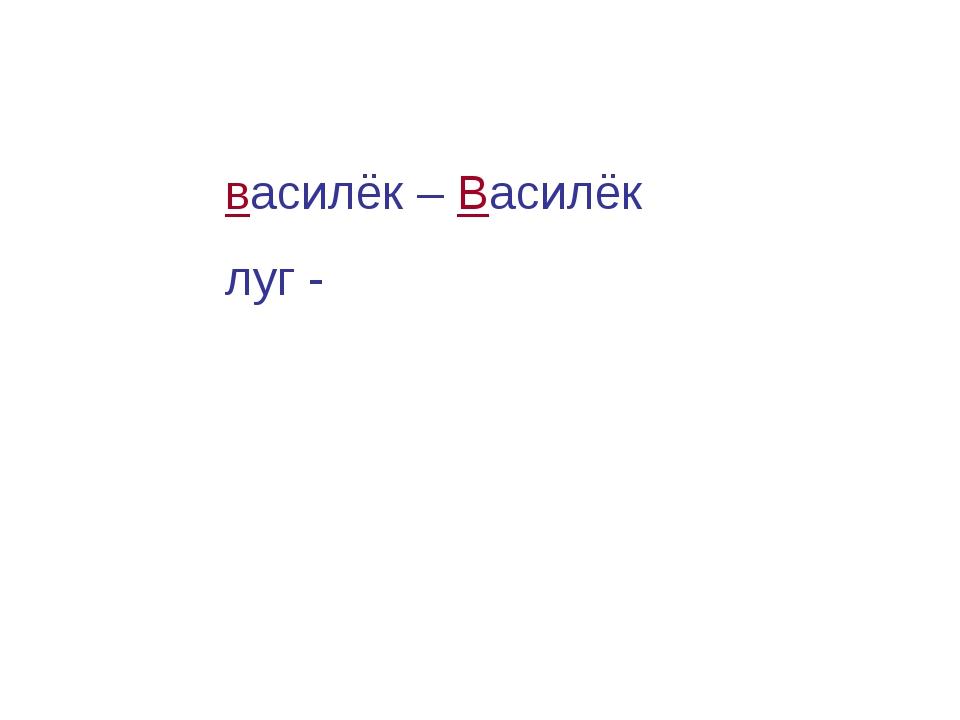 василёк – Василёк луг -