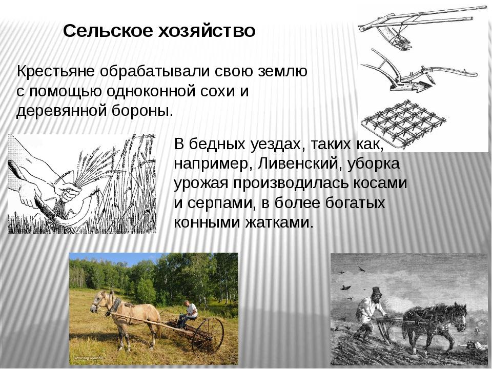 Сельское хозяйство Крестьяне обрабатывали свою землю с помощью одноконной сох...